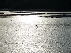 安戸池の海鳥