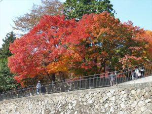 大窪寺の紅葉(2016.11.17)